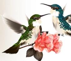小鸟玫瑰图片