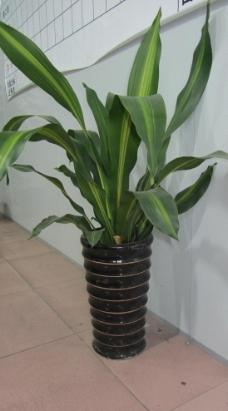 绿色盆栽图片