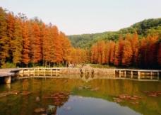 小桥流水枫叶图片