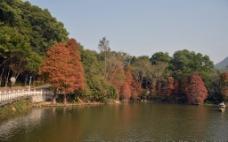 小桥湖水图片