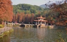 枫叶小亭图片