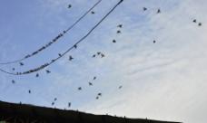 燕子的天空图片