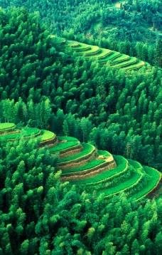 绿色 山林图片