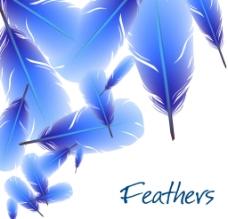 蓝色羽毛图片