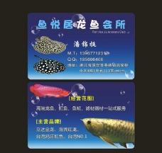 龙鱼名片图片