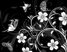 黑白色蝴蝶花纹