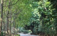 清静的树林图片