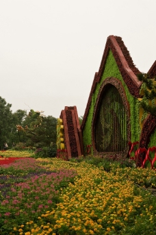 秋菊花坛图片