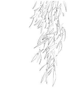 白描柳叶图片图片