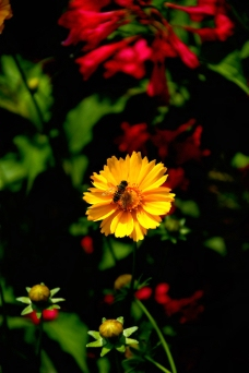 花香蜜蜂来图片