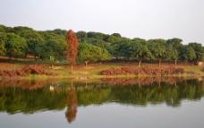 红杉倒影图片