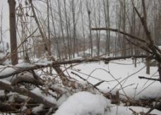 丛林春雪图片
