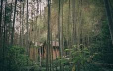 竹林小屋图片