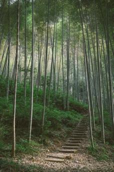 竹林曲径图片