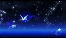 星空蝴蝶背景视频素材图片