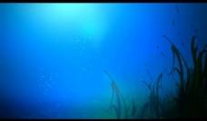 海底鱼类背景视频素材图片