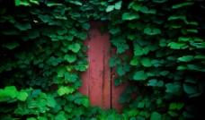 绿色 绿墙 红 门图片