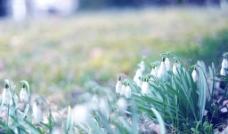 春天 萌发 生机 绿图片