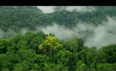 森林云雾弥漫视频素材