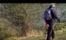 秋季林间散步视频素材