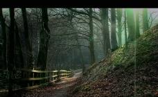森林树木山丘视频素材
