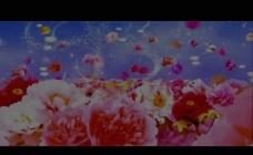牡丹花LED背景视频
