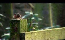森林小鸟吃食视频素材