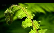 植物绿叶生长过程视频