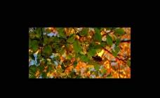 秋天树木落叶视频素材