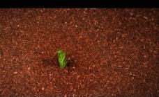 植物发芽生长视频素材