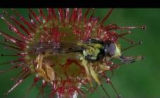 花朵昆虫包容视频素材