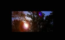 森林树木夕阳视频素材