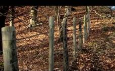 护林围栏视频素材