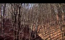 秋天树叶落尽视频素材