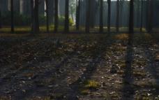 林间光影图片