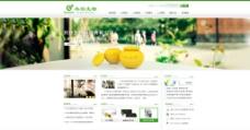保健食品类网站模板图片