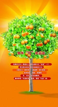 橘子树 桔子 礼品