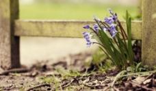 角落盛开的兰花图片