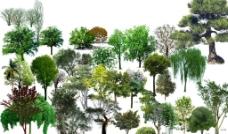 乔木 植物素材 立体图片