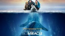 鲸奇 巨大奇迹图片
