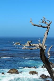 太平洋海岸圖片
