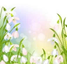 鮮花背景圖片
