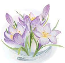 手繪鮮花圖片