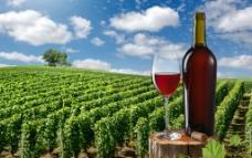 葡萄酒庄园图片