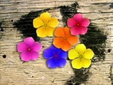 花儿朵朵仿真花PSD背景素材