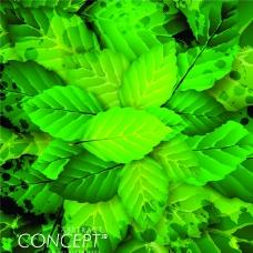 新鲜绿叶背景
