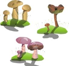 矢量蘑菇图片