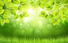 草地綠草圖片