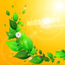 綠葉草地鮮花圖片