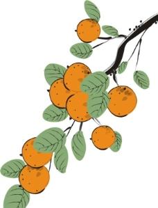 手绘柿子图片